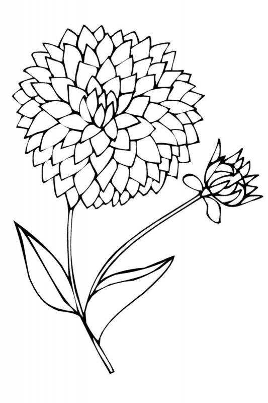 Desene Cu Flori De Colorat Planșe și Imagini De Colorat Cu