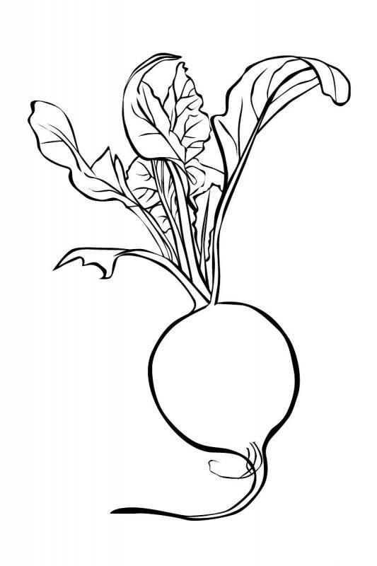 Desene Cu Legume De Colorat Planșe și Imagini De Colorat Cu