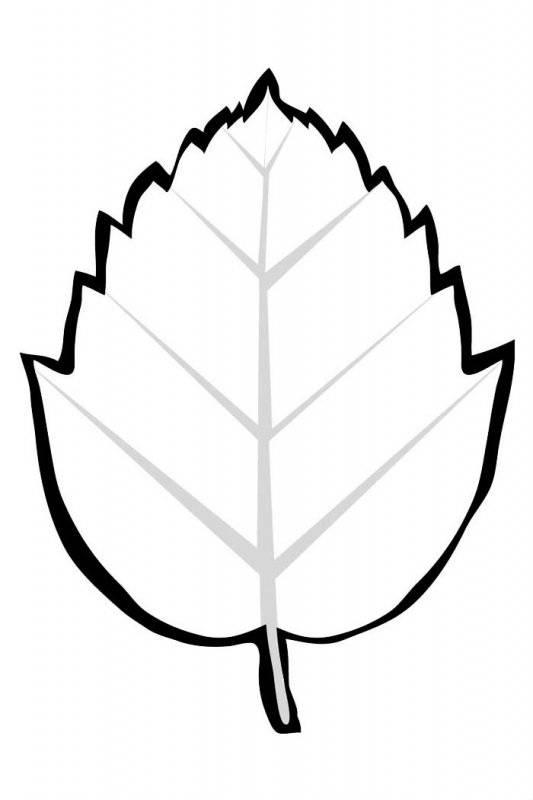 Desene Cu Frunze De Colorat Planșe și Imagini De Colorat Cu
