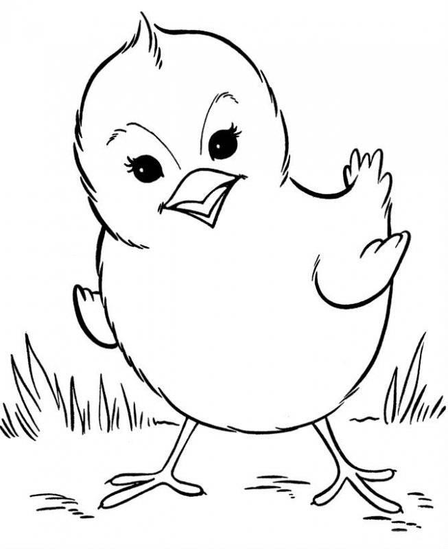 Desene Cu Păsări De Colorat Planșe și Imagini De Colorat Cu