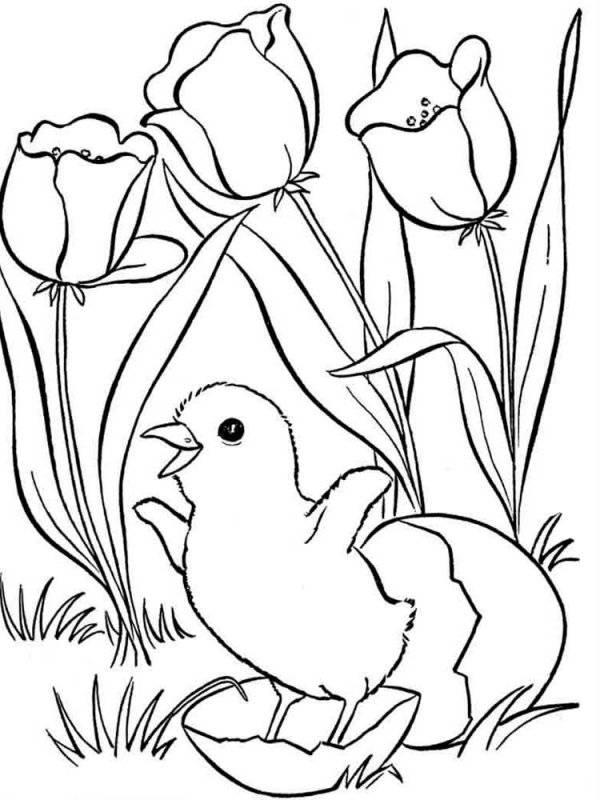 Desene Cu Primavara De Colorat Planșe și Imagini De Colorat Cu