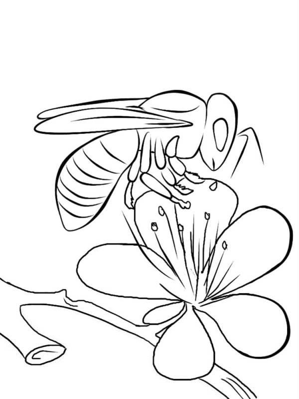 Desene Cu Albine De Colorat Planșe și Imagini De Colorat Cu