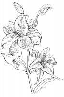 Desene cu Flori Frumoase de colorat, planșe și imagini de colorat cu flori frumoase