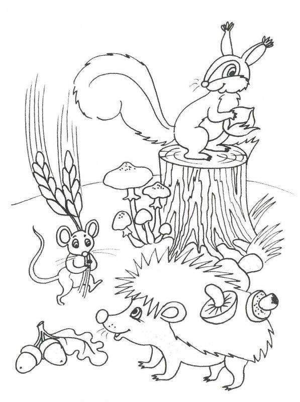 Desene Cu Toamna De Colorat Planșe și Imagini De Colorat Cu