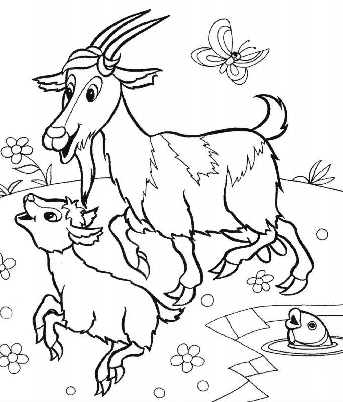 Desene De Colorat Cu Animale Domestice Idea Gallery