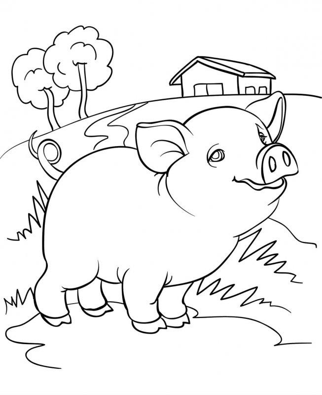 Desene Cu Animale Domestice De Colorat Imagini și Planșe De