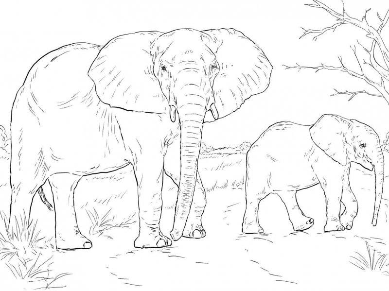 Desene Cu Animale Salbatice De Colorat Imagini și Planșe De