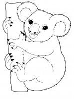 Desene cu Ursul koala de colorat, imagini și planșe de colorat cu Ursul koala