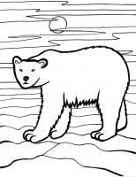 Desene cu Ursul Polar de colorat, imagini și planșe de colorat cu Ursul polar