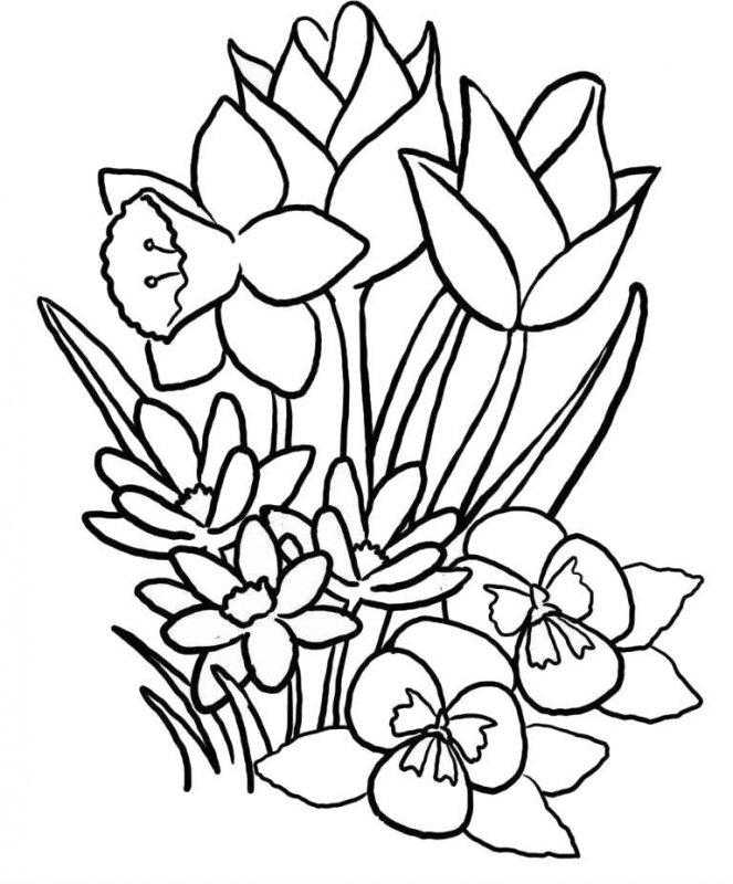 Desene Cu Flori De Primavara De Colorat Imagini și Planșe De