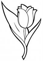 Desene cu Lalele de colorat, imagini și planșe de colorat cu flori Lalele