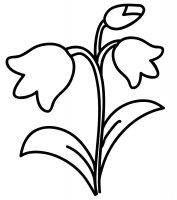 Desene cu Flori Clopotei de colorat, imagini și planșe de colorat cu flori Clopotei