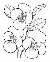 Desene cu Viorele de colorat, imagini și planșe de colorat cu Viorele