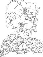 Desene cu Orhidee de colorat, imagini și planșe de colorat cu Orhidee