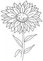 Desene cu Aster de colorat, imagini și planșe de colorat cu flori Aster