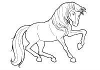 Desene cu Cai de colorat, imagini și planșe de colorat cu Cai