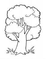 Desene cu Copaci de colorat, imagini și planșe de colorat cu copac