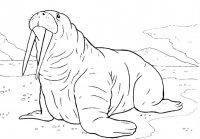 Desene cu Animale de la Polul Nord de colorat, imagini și planșe de colorat cu Animale de la poli