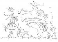 Animale Marine