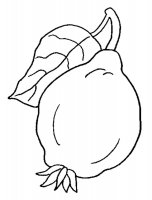 Desene cu Gutui de colorat, imagini și planșe de colorat cu Gutui