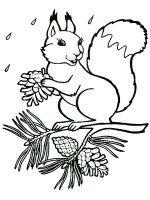 Desene cu Veverite de colorat, imagini și planșe de colorat cu Veverite